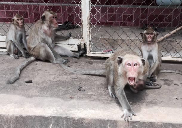 Missione Thailandia: in viaggio verso il Nord del paese