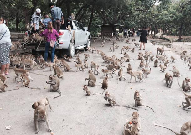 Viaggio in Tailandia: 17 agosto