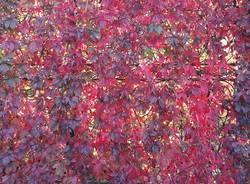 L\'autunno a Villa Castiglioni