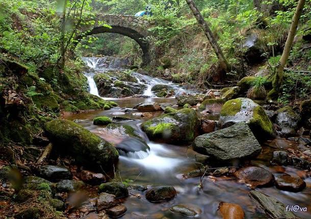 Cuasso al Monte, Rio Caavallizza - foto di Fil Impie