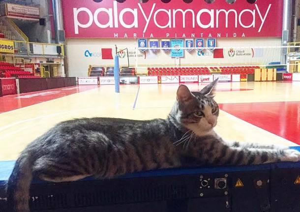 gatto palayamamay