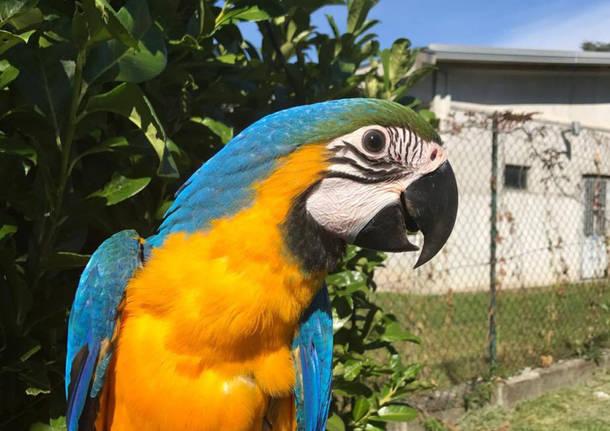 Il salvataggio del pappagallo Eliseo