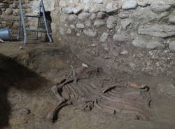 Scavo archeologico Torba 2017 bue longobardo