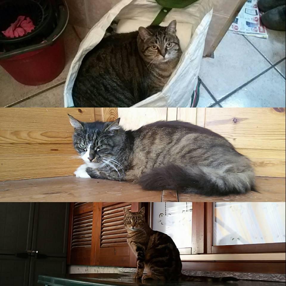 Aiuto ho perso 3 gatti