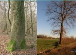 alberi parco mughetti
