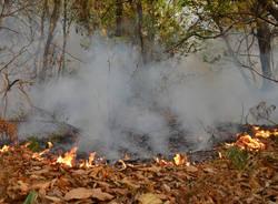 fronte incendio boschi