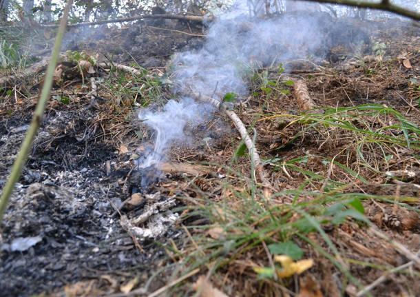 fuoco bosco