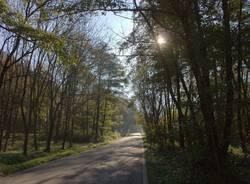 Runner fra i boschi