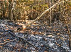 I boschi del Campo dei Fiori il giorno dopo l\'incendio