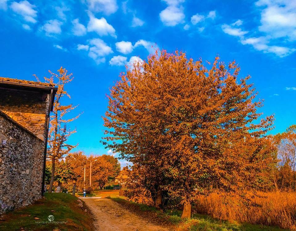 L\'autunno nelle foto dei lettori
