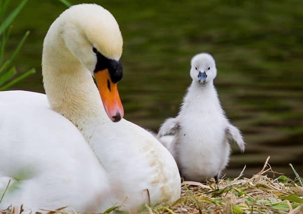 Gli animali del Parco del Ticino