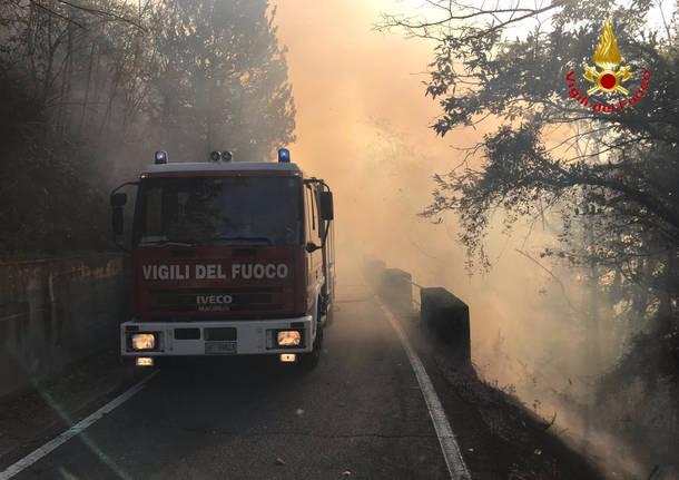 Incendio boschivo Tronzano