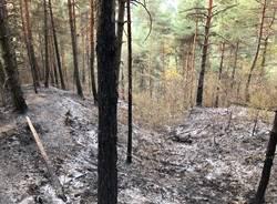 La zona boschiva della Rasa colpita dall'incendio