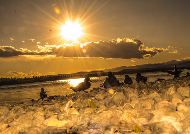 Stretching e sole alla Schiranna - foto di Roby Vanola