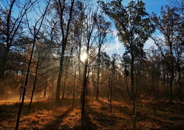 Bei boschi incantati di Vedano Olona