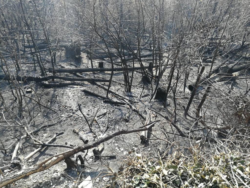 campo dei fiori dentro boschi incendio