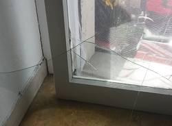 Ladri in casa, si salva grazie al cane