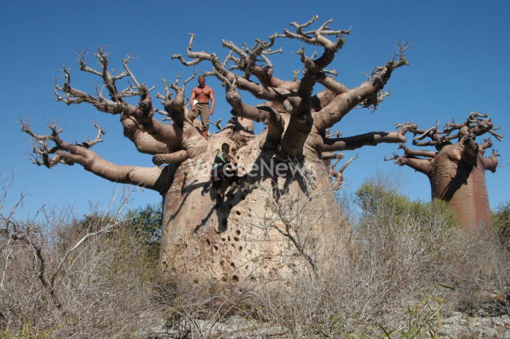 Festa degli alberi Abbracci