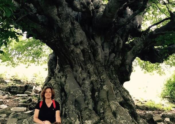 Festa dell'Albero: i vostri abbracci