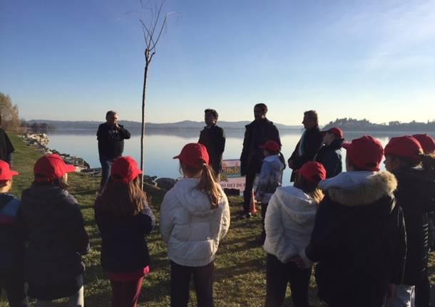 festa dell'albero a Gavirate 2017