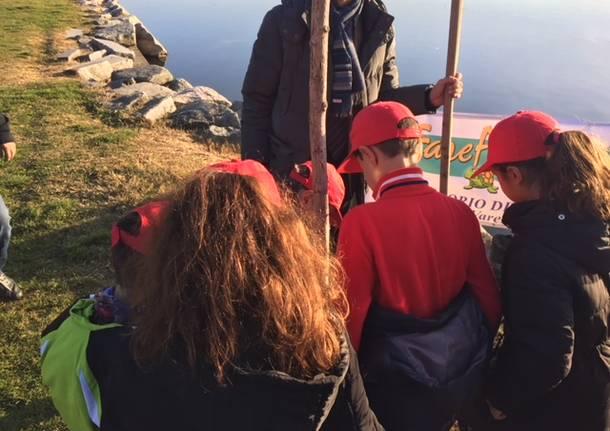Torna il salice sul lungolago di Gavirate
