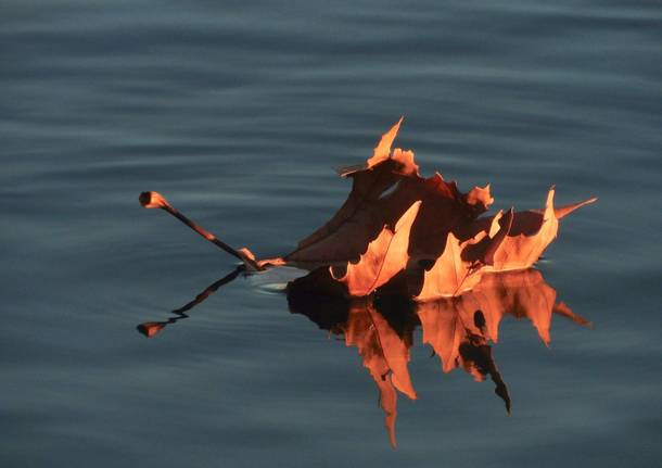 foglia sospesa sull'acqua
