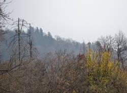 Il campo dei fiori dopo l'incendio