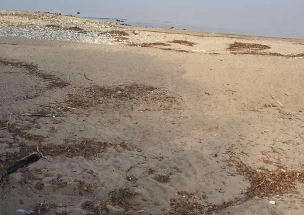 Le dune alla foce del Tresa
