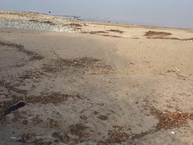 Le dune alla foce del Tresa a Germignaga, novembre 2017