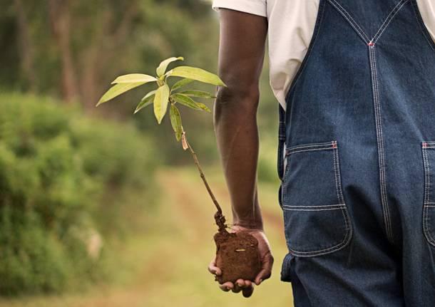 semina piante