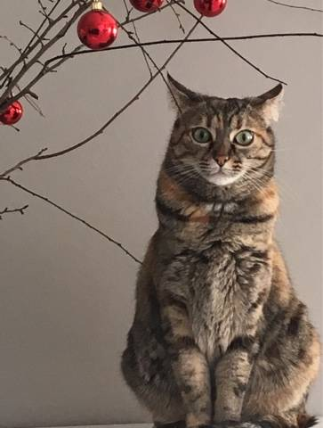 Carmen a Natale