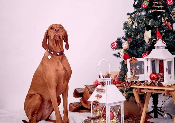 Natale Cuccioloso