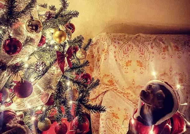 Natale cuccioloso seconda settimana -2-