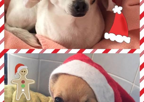 Natale cuccioloso – seconda settimana