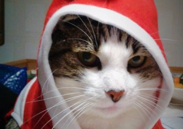 Natale Cuccioloso: tutti i vincitori