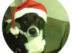 Natale cuccioloso - seconda settimana