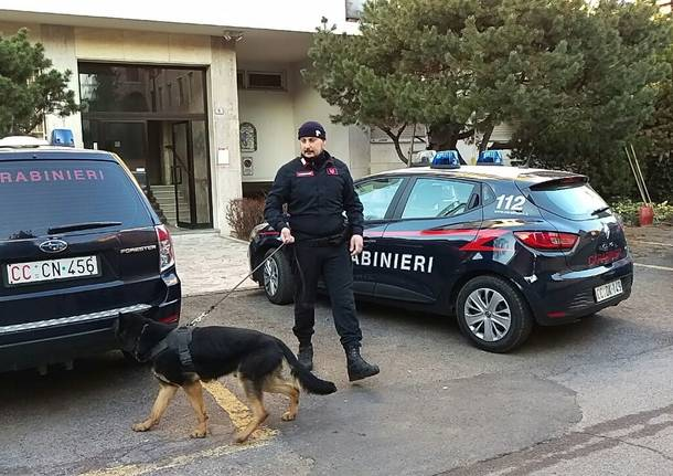 Carabinieri, controlli a tappeto grazie all'olfatto di Denver