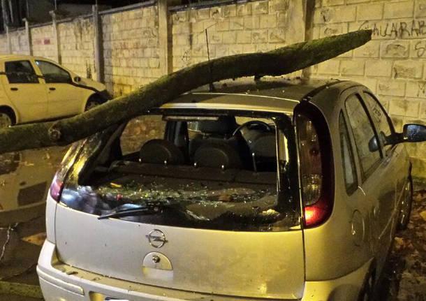 Notte di vento: piante cadute e tanti danni