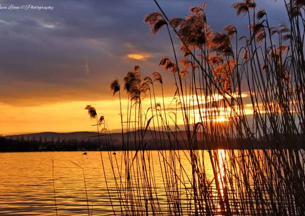 Sei milioni e cinque azioni per salvare il lago di varese