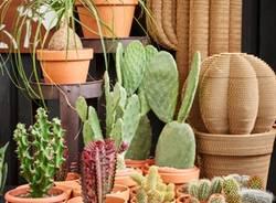 Agricola - Varese Cactus 2018