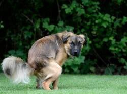 cacca di cane