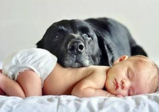 Chi Glielo Dice Al Cane Consigli Quando Arriva Un Bebè