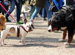 Ai giardini Montanelli nasce i Mobility dog park