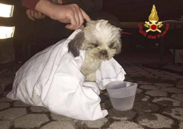 Salvato il cagnolino a Rescaldina
