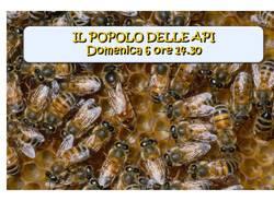 Il popolo delle api - Un pomeriggio con l\'apicultore