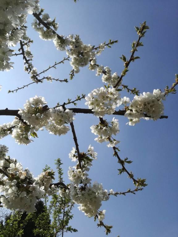 """Concorso """"La tua primavera"""", tutte le foto - 9"""