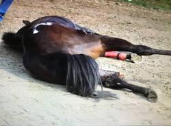 morte cavallo polveroso