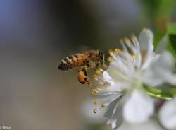 La frenetica raccolta del Polline