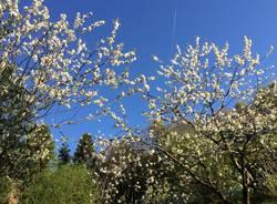 La tua primavera - 3