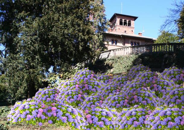 """Le ortensie """"abbracciano"""" Villa Montevecchio"""